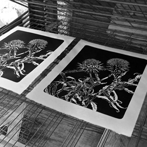 Chardons-gravure-estampe-linocut